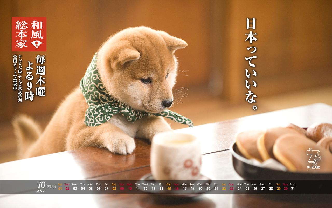 画像 和風総本家の豆助が可愛すぎる 日本っていいな