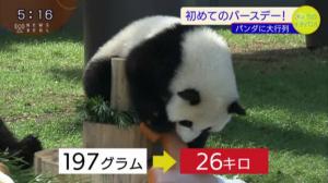 9.18パンダ